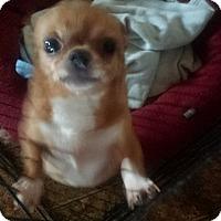 Adopt A Pet :: Tinker Bell aka Tink! - Quentin, PA