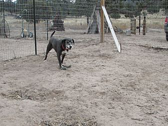 Hound (Unknown Type) Dog for adoption in Pie Town, New Mexico - Johnny