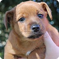 Adopt A Pet :: Tanner - Starkville, MS