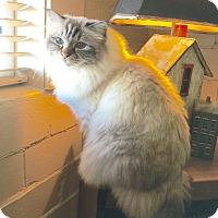 Adopt A Pet :: Higgens - Arlington/Ft Worth, TX