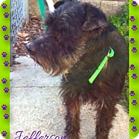 Adopt A Pet :: Jefferson - Sharonville, OH