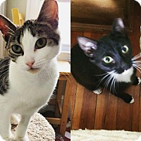 Adopt A Pet :: Valentine and Rose - Somerville, MA