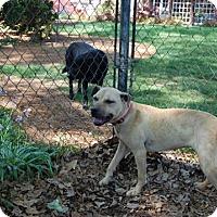 Adopt A Pet :: Raggedy Ann - Mahopac, NY