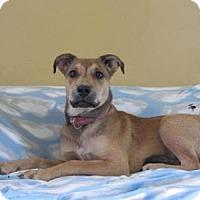 Adopt A Pet :: Shadow - Ridgway, CO