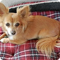 Adopt A Pet :: Sparky - Escondido, CA