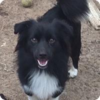 Adopt A Pet :: Leroy - McKinney, TX