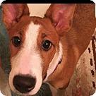 Adopt A Pet :: Kaley