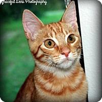 Adopt A Pet :: Pumpkin - Ocala, FL