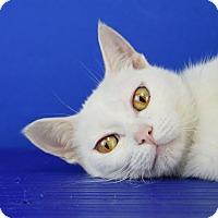 Adopt A Pet :: Xanadu - Carencro, LA