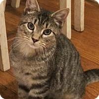 Adopt A Pet :: Frodo - Manchester, CT