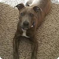 Adopt A Pet :: Dillon - Aurora, IL