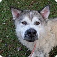 Adopt A Pet :: Balto - Augusta County, VA