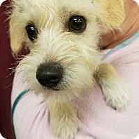 Adopt A Pet :: Dickens - Ogden, UT