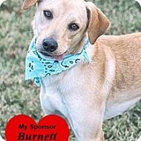 Adopt A Pet :: Boomer - San Leon, TX