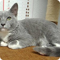 Adopt A Pet :: Skittles - Fairmont, WV