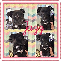 Adopt A Pet :: JAZZ - HARRISBURG, PA