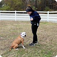 Adopt A Pet :: 1611-0130 Olympia - Virginia Beach, VA