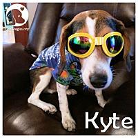 Adopt A Pet :: Kyte - Pittsburgh, PA