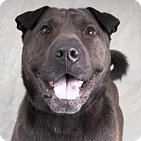 Adopt A Pet :: Reba - Chicago, IL