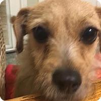 Adopt A Pet :: Sandy 6 - Aurora, CO