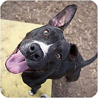 Adopt A Pet :: Sheila - Santa Barbara, CA