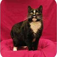 Adopt A Pet :: Skyler - Sacramento, CA