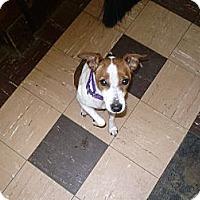 Adopt A Pet :: Wrigley-Bear - Wisconsin Dells, WI