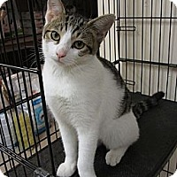 Adopt A Pet :: NOOKIE - Hamilton, NJ
