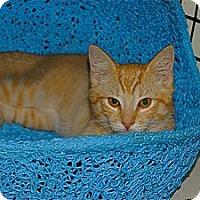 Adopt A Pet :: Rudee - Victor, NY