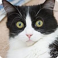 Adopt A Pet :: Claire - Irvine, CA