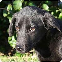 Adopt A Pet :: Violet-ADOPTED - kennebunkport, ME