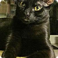 Adopt A Pet :: Dino - Seminole, FL