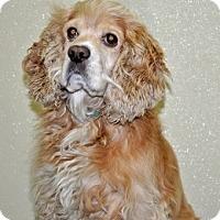 Adopt A Pet :: Mack - Port Washington, NY