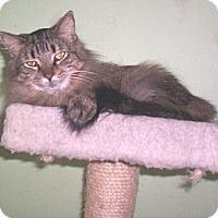 Adopt A Pet :: Cashmere - Grand Chain, IL