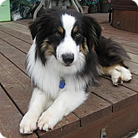 Adopt A Pet :: Timber - Washington, IL