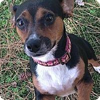 Adopt A Pet :: Effy - Phoenix, AZ