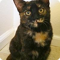 Adopt A Pet :: Mystie - North Highlands, CA