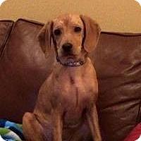 Adopt A Pet :: Lacy - Marlton, NJ