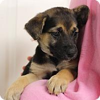 Adopt A Pet :: Alley - Brattleboro, VT