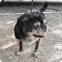Adopt A Pet :: Maude - Austin, TX