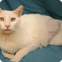 Adopt A Pet :: PEACH - New Cumberland, WV