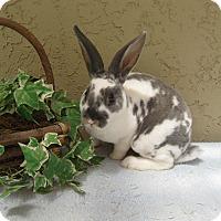 Adopt A Pet :: Britzer - Bonita, CA