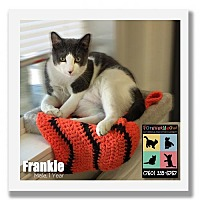 Adopt A Pet :: Frankie - Palm Desert, CA