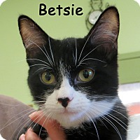 Adopt A Pet :: Betsie - Warren, PA