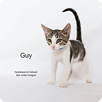 Adopt A Pet :: Guy - Arcadia, CA