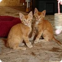 Adopt A Pet :: Chema - Colorado Springs, CO