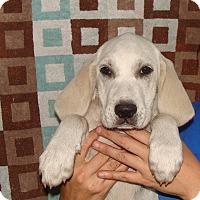 Adopt A Pet :: Purex - Oviedo, FL