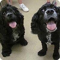 Adopt A Pet :: Sarah 16-074 - Parker, CO