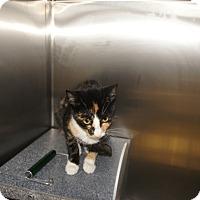 Adopt A Pet :: Matilda - Henderson, NC