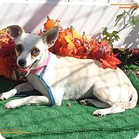 Adopt A Pet :: LADY - Marietta, GA